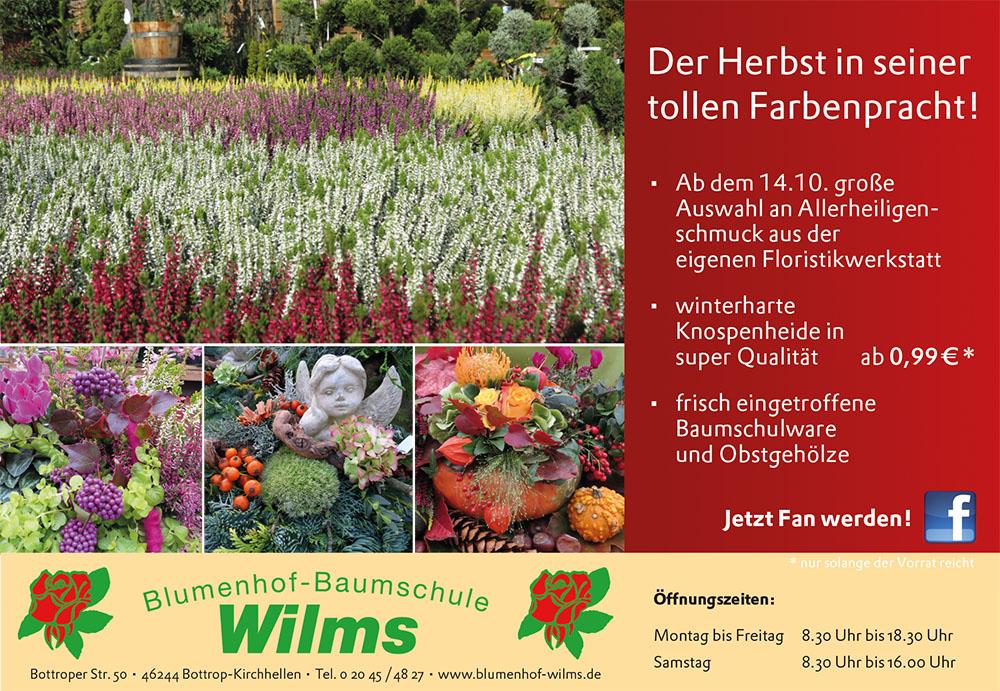 wilms_152x105_1016